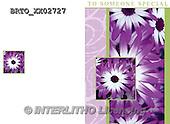 Alfredo, FLOWERS, BLUMEN, FLORES,  photos+++++,BRTOXX02727,#F#
