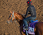October 27, 2014:  Majestic Presence, trained by Jerry Hollendorfer, exercises in preparation for the 14 Hands Winery Breeders' Cup Juvenile Fillies at Santa Anita Race Course in Arcadia, California on October 27, 2014. Scott Serio/ESW/CSM