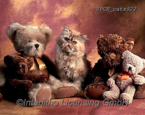 Xavier, ANIMALS, REALISTISCHE TIERE, ANIMALES REALISTICOS, cats, photos+++++,SPCHCATS922,#a#, EVERYDAY