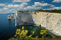 Old Harry Rocks with the Wedge. Dorset, Jurassic Coast, England.