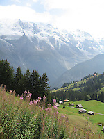 Swiss Alps Vista