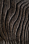 Wood Knots and Texture with Grain