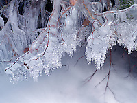 Small seasonal feeder stream with ice. Columbia River Gorge National Scenic Area, Oregon