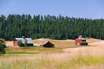 Palouse Hills, Washington, known as the heart of wheat farming in the United States is also famous for its rolling scenery.  This farm landscape is at the base of Kamiak Butte, a Whitman County Park offering camping, picknicking, hiking, and incredible views of both Idaho and Washington Palouse country.