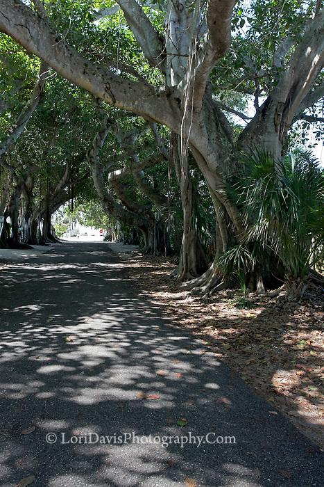 Looking Down Banyan Street, Boca Grande  #FL5