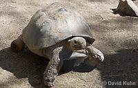 0417-1001  Leopard Tortoise, Geochelone pardalis  © David Kuhn/Dwight Kuhn Photography.