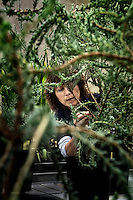 A woman checks a species of Leucadendron plant. It is being recuperated at the Millennuim Seed Bank and now only exists here, it is extinct in nature. It is housed in The Wellcome Trust Millennium Building at the Millennium Seed Bank at Wakehurst Place in West Sussex. The building houses facilities for seed-preparation, laboratories and public exhibitions. There is a large storage vault which lies underneath the building. The Millennium Seeds Bank Partnership is coordinated by Kew Gardens and aims to collect seeds from every wild plant in the world to insure against extinction. It reached its target of banking seeds from all of the UK's native plant species as well as banking 10% of the world's wild plant species in 2009, and aims to have 25% by 2020.