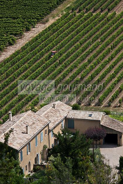 Europe/France/Provence-Alpes-Côte d'Azur/84/Vaucluse/Lubéron/Ménerbes: Le vignoble AOC Côtes du Lubéron