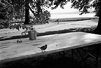 Switzerland. Geneva. Parc Mon Repos. A sparrow and an a flower pot on a picnic table. A woman seats on a bench while a lonely man walks in the public park close to Lake Geneva ( Lac Léman). 24.05.07 © 2007 Didier Ruef