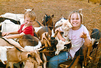 Brother and sister play with goats at Surfing Goat Dairy, Maui, where visitors can tour the cheese making factory and feed the goats.