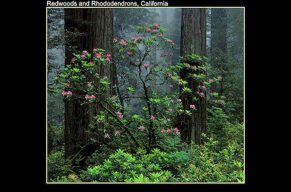 Morning fog is the norm along the coast, so plan accordingly. <br />