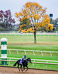 October 30, 2020: Vequist, trained by trainer Robert E. Reid Jr., exercises in preparation for the Breeders' Cup Juvenile Fillies at Keeneland Racetrack in Lexington, Kentucky on October 30, 2020. Scott Serio/Eclipse Sportswire/Breeders Cup/CSM