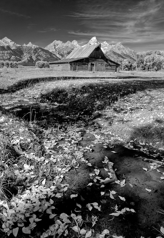 Barn and Teton Mountains with fall color. Grand Teton National Park, WY
