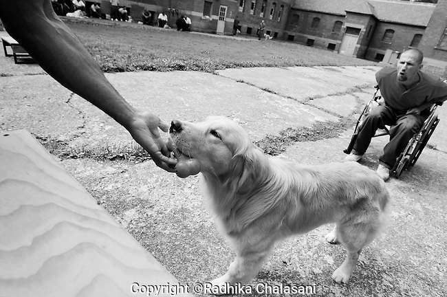 BEACON, NEW YORK:  Andy (R) commands Rezzie to fetch a plastic bone during a training class for the Puppies Behind Bars (PPB) program at Fishkill Correctional Facility. The training program prepares puppies to be service dogs and consists of one day of class a week on topics such as obedience training, grooming, basic care of the dogs. The dogs spend 18-20 months in the program working with the prisoners.