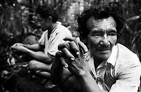 Índio Werekena, morador da comunidade de Anamoim no alto rio Xié, aguarda o retorno de mais um dia de trabalho com o corte da pioaçaba. A  árvore que normalmente aloja os mais variados tipos de insetos representando um grande risco aos índios durante sua coleta . A fibra  um dos principais produtos geradores de renda na região é  coletada de forma rudimentar. Até hoje é utilizada na fabricação de cordas para embarcações, chapéus, artesanato e principalmente vassouras, que são vendidas em várias regiões do país.<br />Alto rio Xié, fronteira do Brasil com a Colômbia a cerca de 1.000Km oeste de Manaus.<br />06/06/2002.<br />Foto: Paulo Santos/Interfoto Expedição Werekena do Xié<br /> <br /> Os índios Baré e Werekena (ou Warekena) vivem principalmente ao longo do Rio Xié e alto curso do Rio Negro, para onde grande parte deles migrou compulsoriamente em razão do contato com os não-índios, cuja história foi marcada pela violência e a exploração do trabalho extrativista. Oriundos da família lingüística aruak, hoje falam uma língua franca, o nheengatu, difundida pelos carmelitas no período colonial. Integram a área cultural conhecida como Noroeste Amazônico. (ISA)