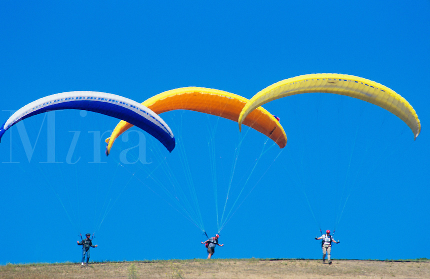 Para-gliders at Elings Park Santa Barbara