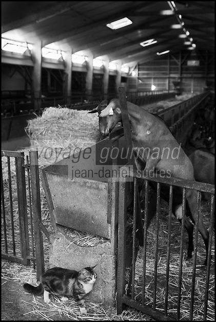Europe/France/Poitou-Charentes/79/Deux-Sèvres/Villemain: Fromagerie à la ferme de Paul Gorgelet: Le Petit Boisselage -La Chèvrerie - Chèvre et le chat de la laiterie