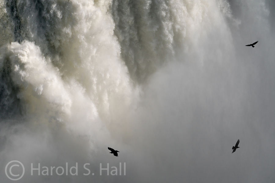 Shoshone Falls near Twin Falls, Idaho has been little more than a trickle in recent years.  Due to the abnormal amounts of snow in 2017 it looks like Niagara Falls.  Three ravens soar in the mist of the falls.