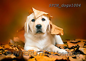 Xavier, ANIMALS, REALISTISCHE TIERE, ANIMALES REALISTICOS, dogs, photos+++++,SPCHDOGS1004,#A#, EVERYDAY