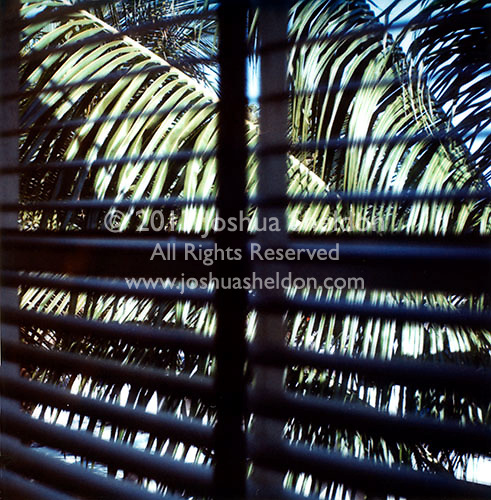 Palm fronds through window shades&#xA;<br />