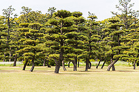 Trees in a park outside the Imperial Palace in Tokyo.