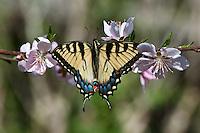 Butterflies, Moths and Dragonflies