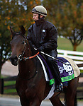 October 28, 2015: Make Believe (GB), trained by Andre Fabre, and owned by Prince A.A. Faisal, is entered in the Breeder's Cup Mile. Candice Chavez/ESW/CSM