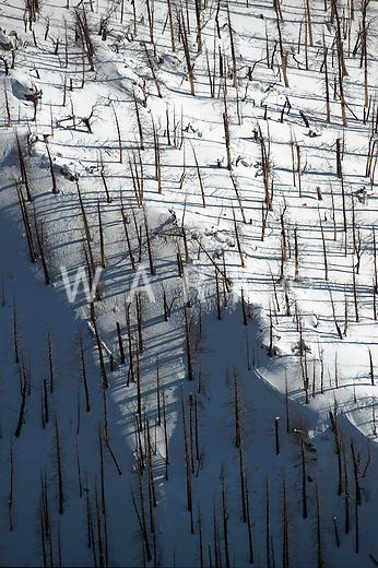 Tree ridge in winter following the summer 2011 Medano fire