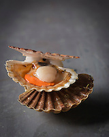 Gastronomie: Coquilles Saint-Jacques de la baie de Quiberon