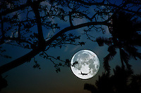 Airplane arrives under a full moon on a romantic evening in Honolulu, Hawaii.