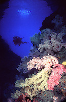 Softcoral Arch,Palau