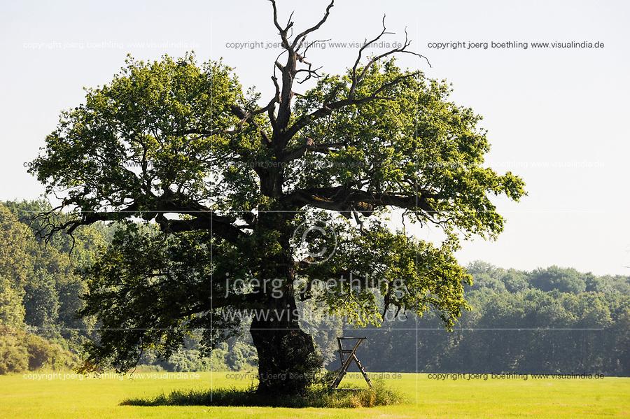 GERMANY, landscape park Dessau Woerlitz, forest / Deutschland, Kulturstiftung und Gartenreich Dessau-Woerlitz in Sachsen-Anhalt, Auenwald, alte knorrige Eiche und Hochsitz zur Jagd