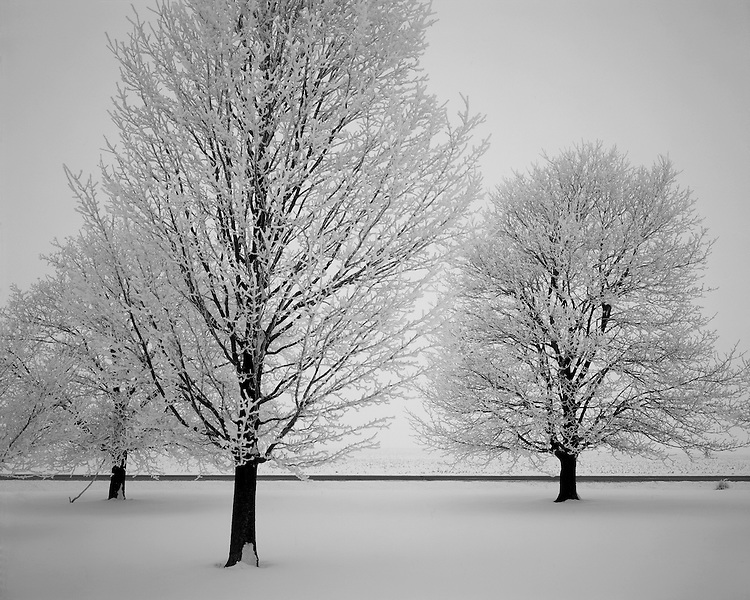Hoarfrost-covered trees on a farm in northern Illinois; LaSalle County, IL
