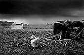 Shequisht, Albania<br /> February 1997<br /> <br /> Albania was fundamentally an agricultural country during the years of communism. Today private farmers cannot afford the price of machinery so most of the land is not farmed. The pile boxes are everywhere in the country.