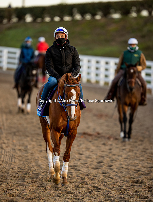 November 3, 2020: King Fury, trained by trainer Kenneth G. McPeek, exercises in preparation for the Breeders' Cup Juvenile at Keeneland Racetrack in Lexington, Kentucky on November 3, 2020. Alex Evers/Eclipse Sportswire/Breeders Cup