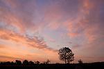 Europa, DEU, Deutschland, Hessen, Niederwalgern, Sonnenaufgang, Daemmerung, Himmel, Wolken, Baum, Morgenstimmung, Kategorien und Themen, Natur, Umwelt, Landschaft, Jahreszeiten, Stimmungen, Landschaftsfotografie, Landschaften, Landschaftsphoto, Landschaftsphotographie, Wetter, Himmel, Wolken, Wolkenkunde, Wetterbeobachtung, Wetterelemente, Wetterlage, Wetterkunde, Witterung, Witterungsbedingungen, Wettererscheinungen, Meteorologie, Bauernregeln, Wettervorhersage, Wolkenfotografie, Wetterphaenomene, Wolkenklassifikation, Wolkenbilder, Wolkenfoto<br /> <br /> [Fuer die Nutzung gelten die jeweils gueltigen Allgemeinen Liefer-und Geschaeftsbedingungen. Nutzung nur gegen Verwendungsmeldung und Nachweis. Download der AGB unter http://www.image-box.com oder werden auf Anfrage zugesendet. Freigabe ist vorher erforderlich. Jede Nutzung des Fotos ist honorarpflichtig gemaess derzeit gueltiger MFM Liste - Kontakt, Uwe Schmid-Fotografie, Duisburg, Tel. (+49).2065.677997, <br /> archiv@image-box.com, www.image-box.com]