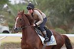 RIYADH, SA February 19 2021: DERYAN (FR) Track work from King Abddulaziz Racetrack, Riyadh, Saudi Arabia. Shamela Hanley/Eclipse Sportswire/CSM