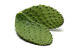 Cactus still life.