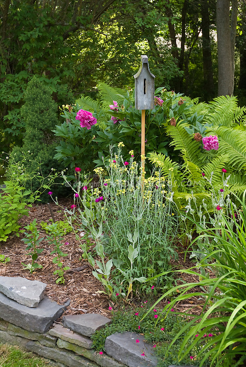 Butterfly house garden with Peonies, ferns, raised bed, under trees