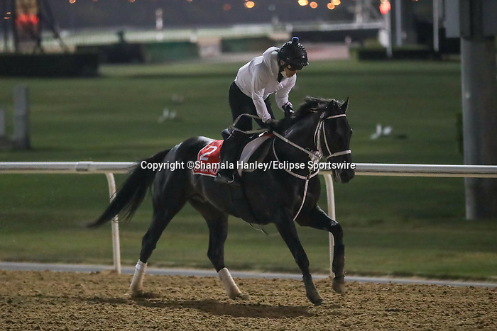 March 25, 2021: Dubai World Cup contender Chuwa Wizard (JPN) trains on the track for trainer Ryuji Okubo at Meydan Racecourse, Dubai, UAE.<br />