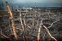 Dead trees near the nickel procesing facility at Nikel in the Russian Arctic. Sulphur dioxide emitted from the factory has killed vegetation, polluted ground water and causes asthma, especially among children. The factory was built in 1937 during Stalin's rule. In 2001, Norway gave Norilsk Nickel, the head company, 32 million euros to modernise the facility and cut the pollution. The money disappeared, but the factory was not improved. /Felix Features