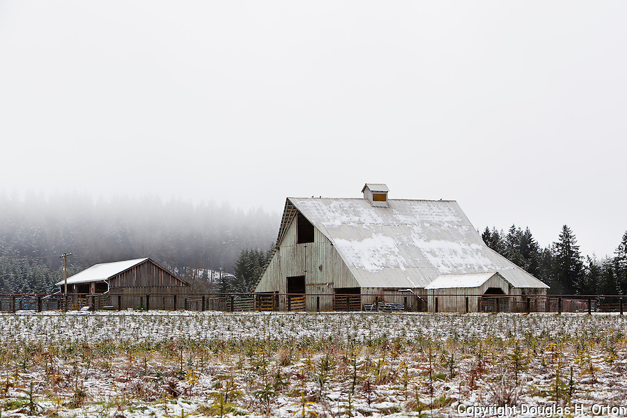 A snowy April morning graced by a barn and tree farm in the Willamette Valley, Oregon, near Silverton and Silver Falls State Park.