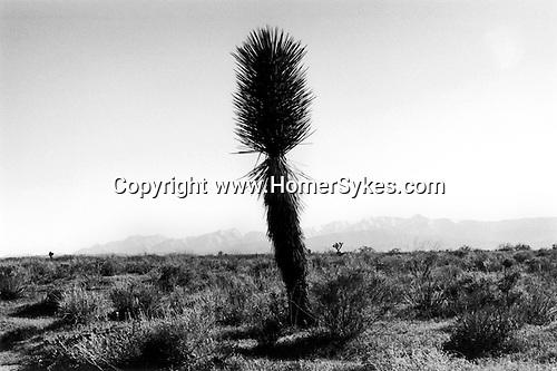 Mojave Desert, California USA 2001. .
