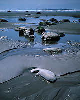 Low tide on the Pacific Ocean at Beach 6; Olympic National Park, WA
