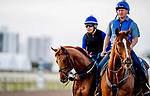 HALLANDALE BEACH, FL - JANUARY 25: Gun Runner jogs around the track during morning workouts as horses prepare for the Pegasus World Cup Invitational at Gulfstream Park Race Track on January 25, 2018 in Hallandale Beach, Florida. (Photo by Scott Serio/Eclipse Sportswire/Breeders Cup)