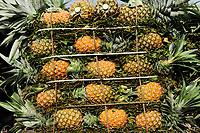 BANGLADESH, Region Madhupur, village local market, pineapple