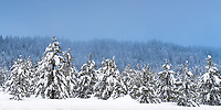 An Idaho forest had a distinctive blue tone as the sun sets on a fresh blanket of snow.