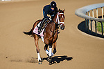 APRIL 27, 2015: Angela Renee, trained by Todd Pletcher, exercises in preparation for the 141st Kentucky Oaks  at Churchill Downs in Louisville, Kentucky. Jon Durr/ESW/Cal Sport Media