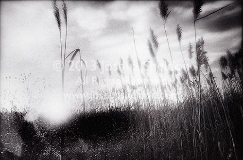 Sunset through reeds<br />