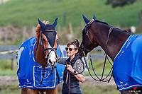 Class: 23 - Alltech Horse 1.35- 1.40m. 2020 NZL-Fiber Fresh GP SJ Show Spring Series Show. Woodhill Sands. Sunday 20 September. Copyright Photo: Libby Law Photography